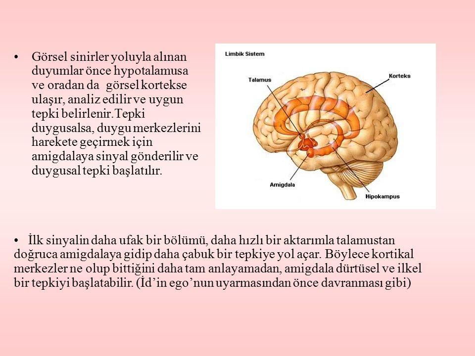 Görsel sinirler yoluyla alınan duyumlar önce hypotalamusa ve oradan da görsel kortekse ulaşır, analiz edilir ve uygun tepki belirlenir.Tepki duygusalsa, duygu merkezlerini harekete geçirmek için amigdalaya sinyal gönderilir ve duygusal tepki başlatılır.