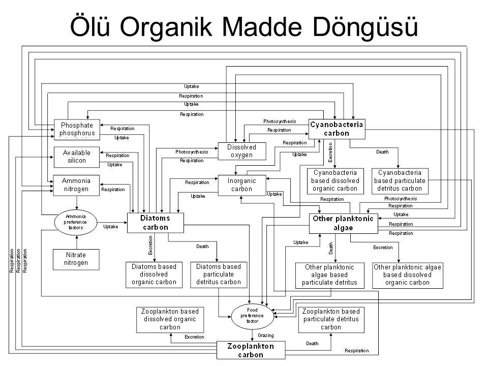 Ölü Organik Madde Döngüsü