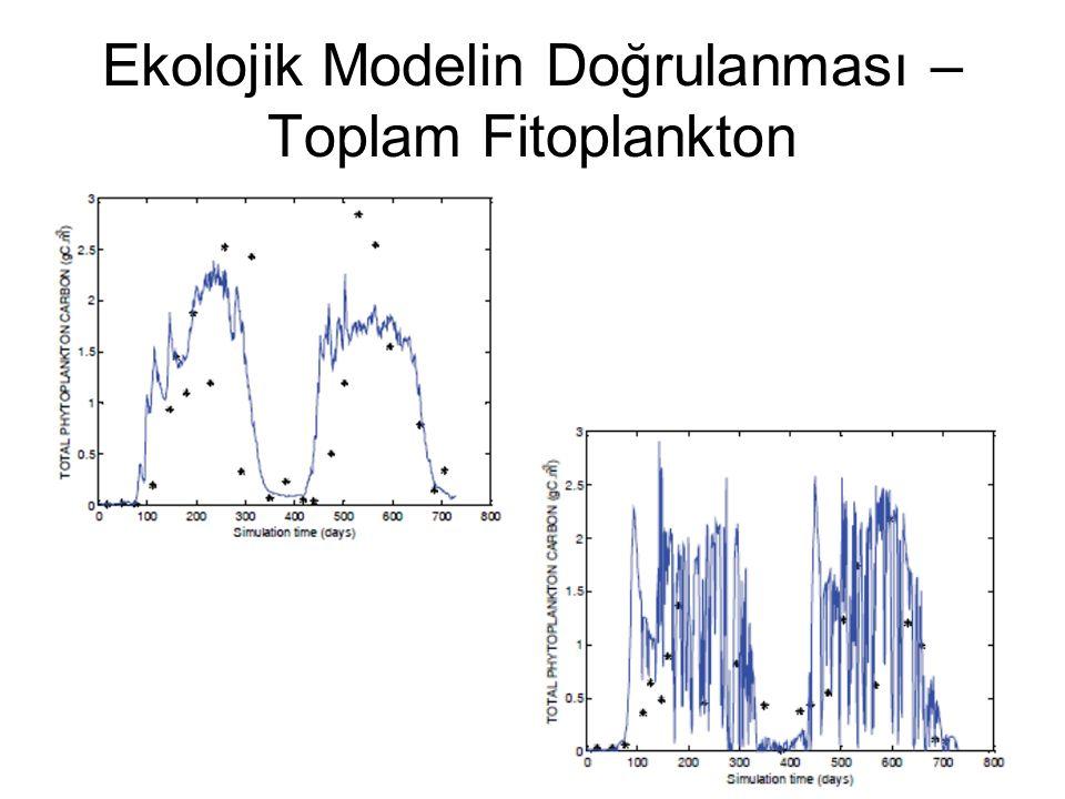 Ekolojik Modelin Doğrulanması – Toplam Fitoplankton