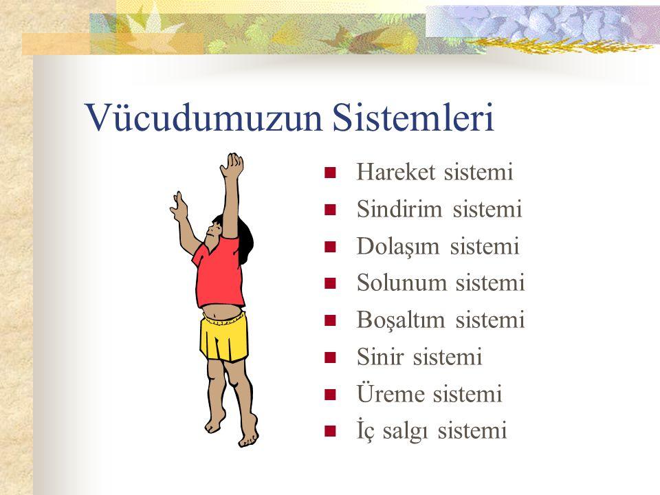 Vücudumuzun Sistemleri