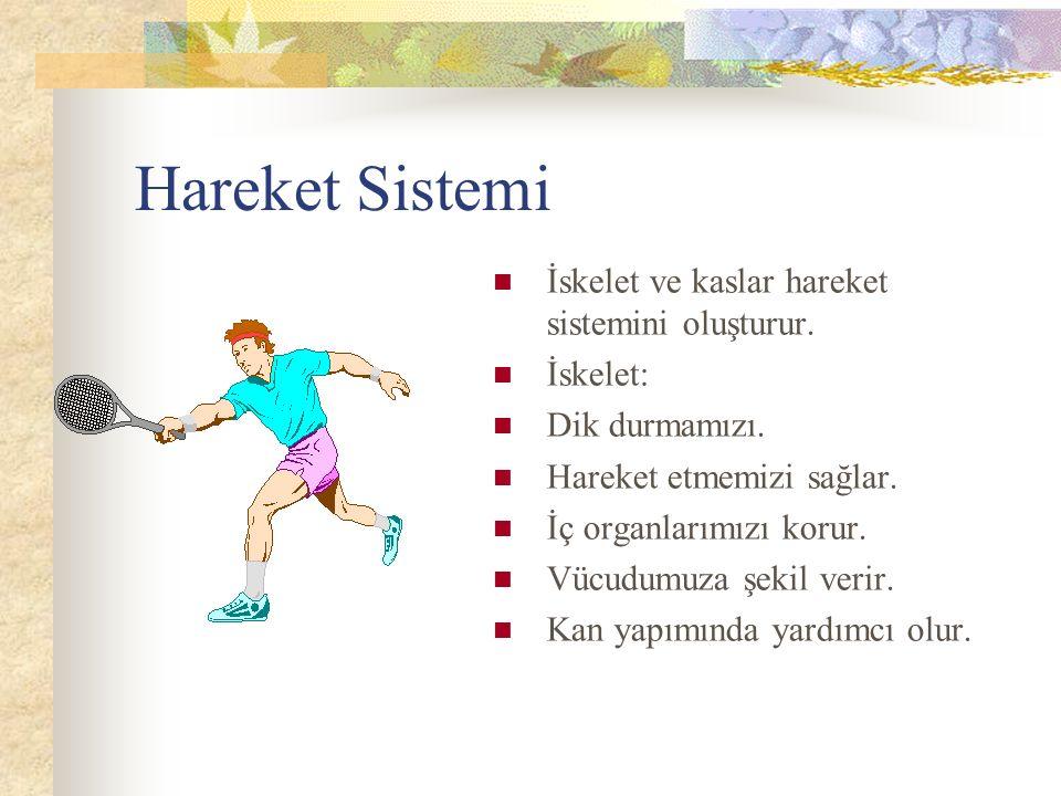 Hareket Sistemi İskelet ve kaslar hareket sistemini oluşturur.