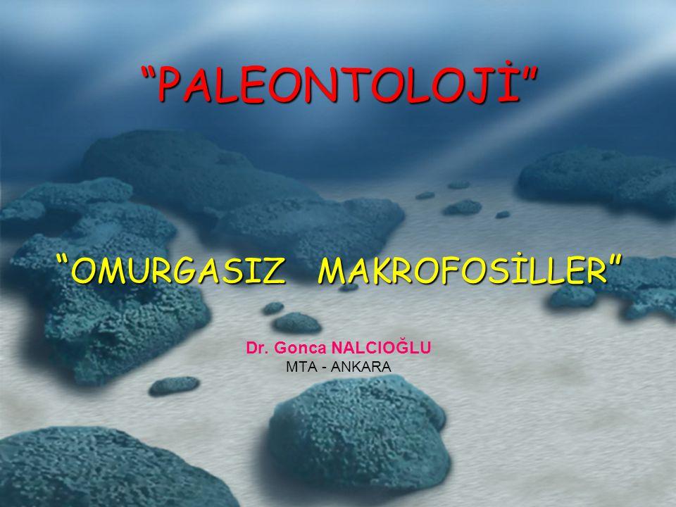PALEONTOLOJİ OMURGASIZ MAKROFOSİLLER Dr