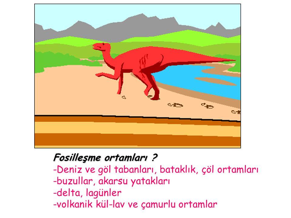 Fosilleşme ortamları -Deniz ve göl tabanları, bataklık, çöl ortamları. -buzullar, akarsu yatakları.