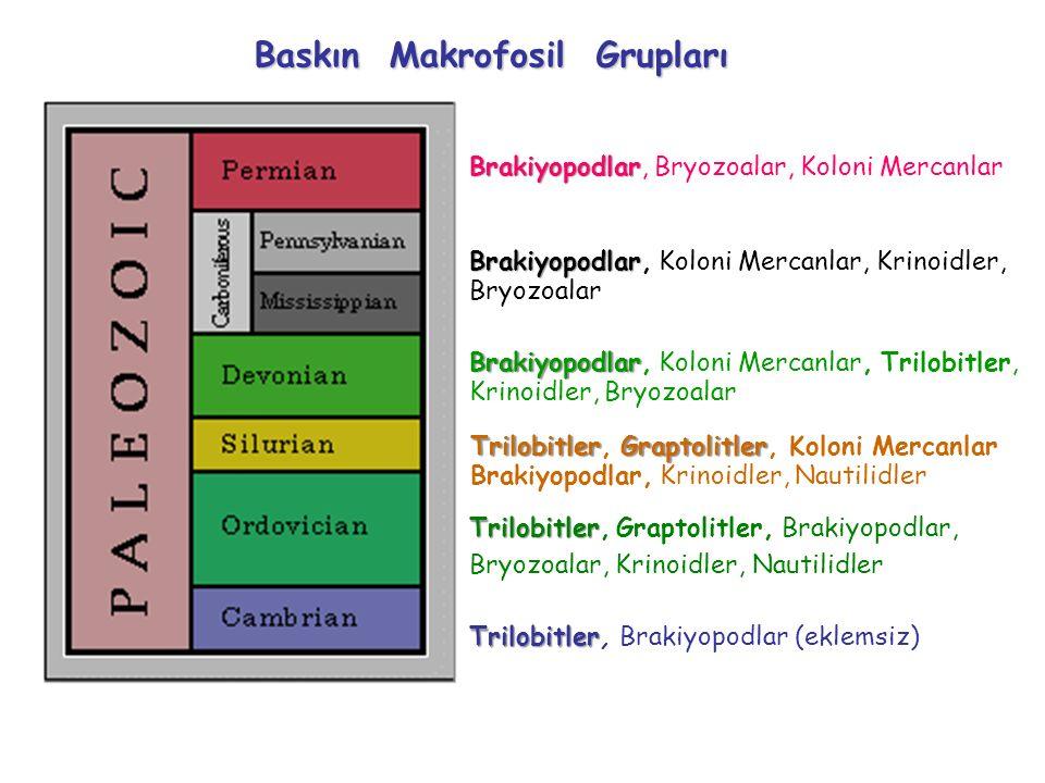 Baskın Makrofosil Grupları