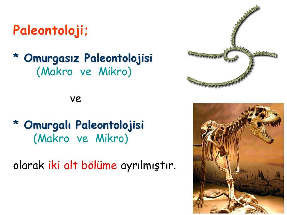 Paleontoloji; * Omurgasız Paleontolojisi (Makro ve Mikro) ve