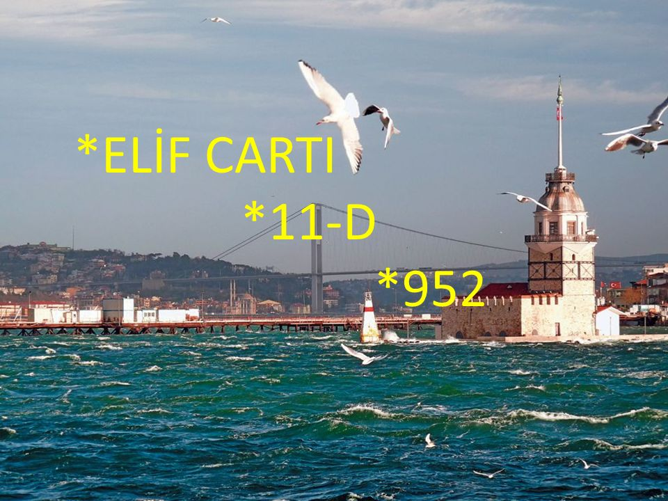 *ELİF CARTI *11-D *952