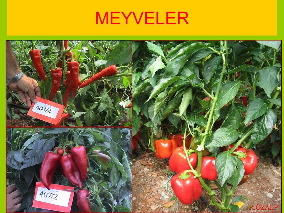 MEYVELER R.ÖZALP