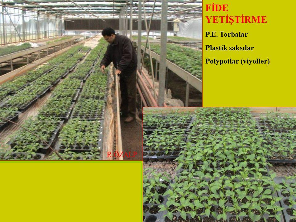 FİDE YETİŞTİRME P.E. Torbalar Plastik saksılar Polypotlar (viyoller)