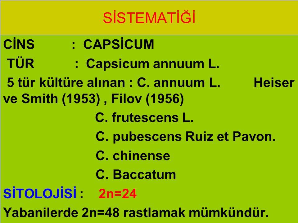 SİSTEMATİĞİ CİNS : CAPSİCUM TÜR : Capsicum annuum L.