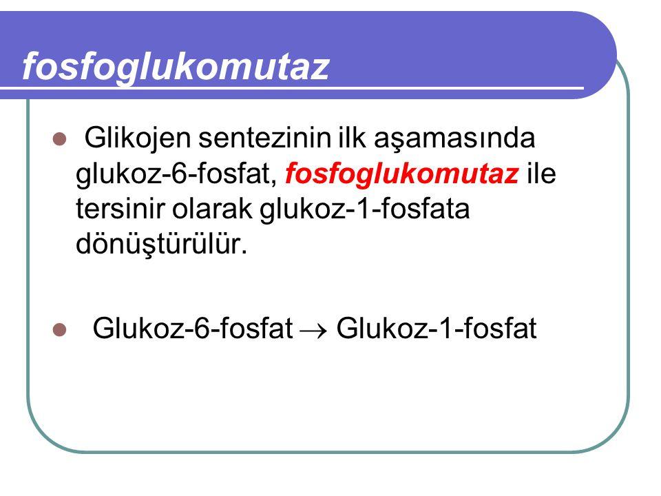 fosfoglukomutaz Glikojen sentezinin ilk aşamasında glukoz-6-fosfat, fosfoglukomutaz ile tersinir olarak glukoz-1-fosfata dönüştürülür.