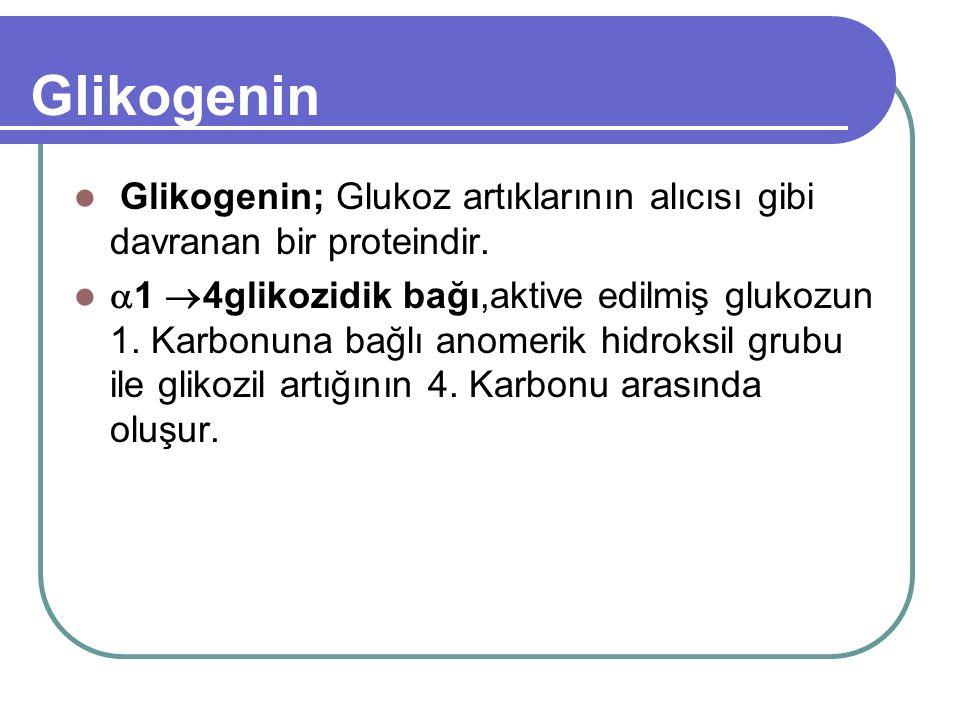 Glikogenin Glikogenin; Glukoz artıklarının alıcısı gibi davranan bir proteindir.