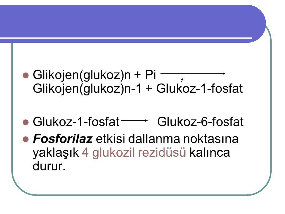 Glikojen(glukoz)n + Pi Glikojen(glukoz)n-1 + Glukoz-1-fosfat