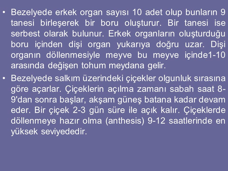 Bezelyede erkek organ sayısı 10 adet olup bunların 9 tanesi birleşerek bir boru oluşturur. Bir tanesi ise serbest olarak bulunur. Erkek organların oluşturduğu boru içinden dişi organ yukarıya doğru uzar. Dişi organın döllenmesiyle meyve bu meyve içinde1-10 arasında değişen tohum meydana gelir.