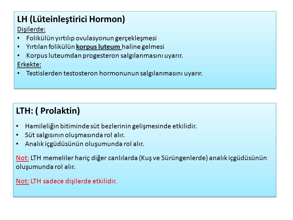 LH (Lüteinleştirici Hormon) Dişilerde: