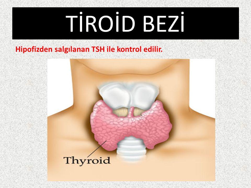 TİROİD BEZİ Hipofizden salgılanan TSH ile kontrol edilir.
