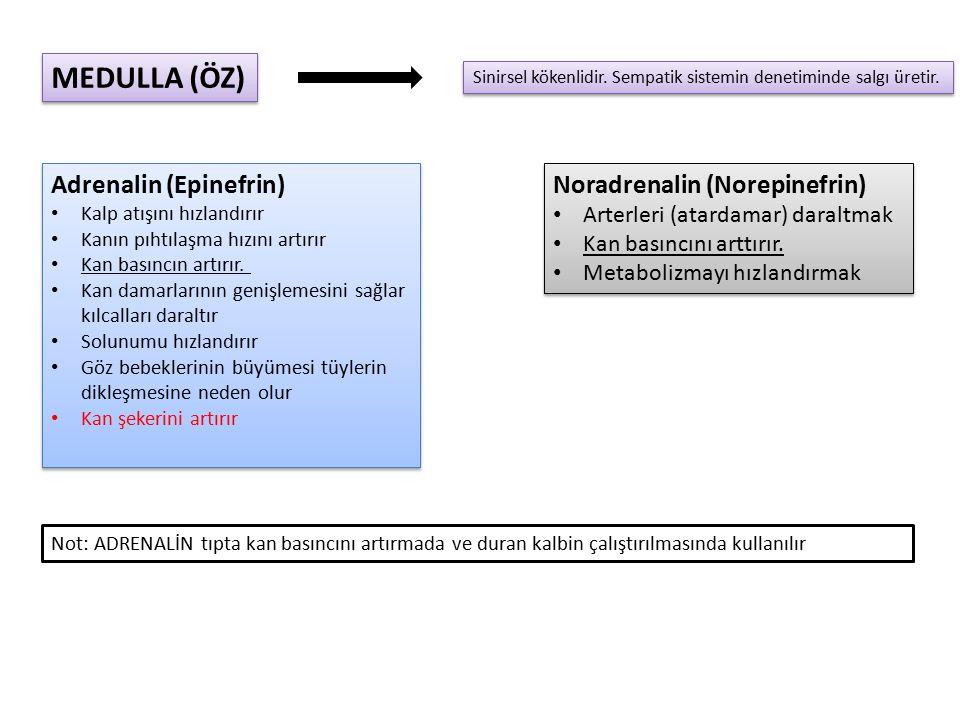 MEDULLA (ÖZ) Adrenalin (Epinefrin) Noradrenalin (Norepinefrin)