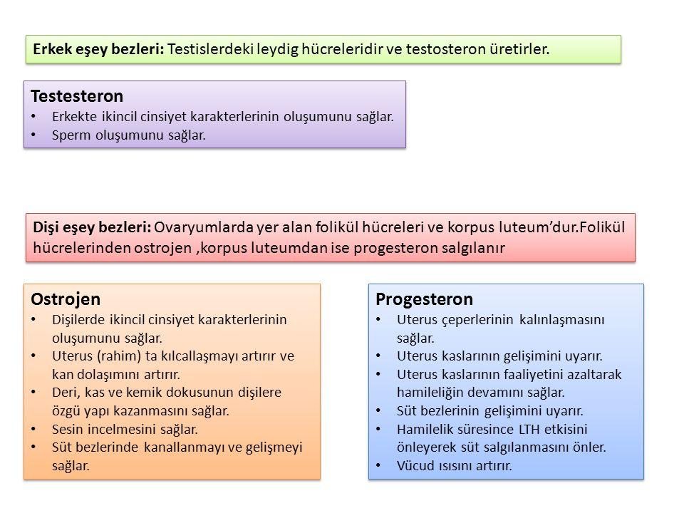 Testesteron Ostrojen Progesteron