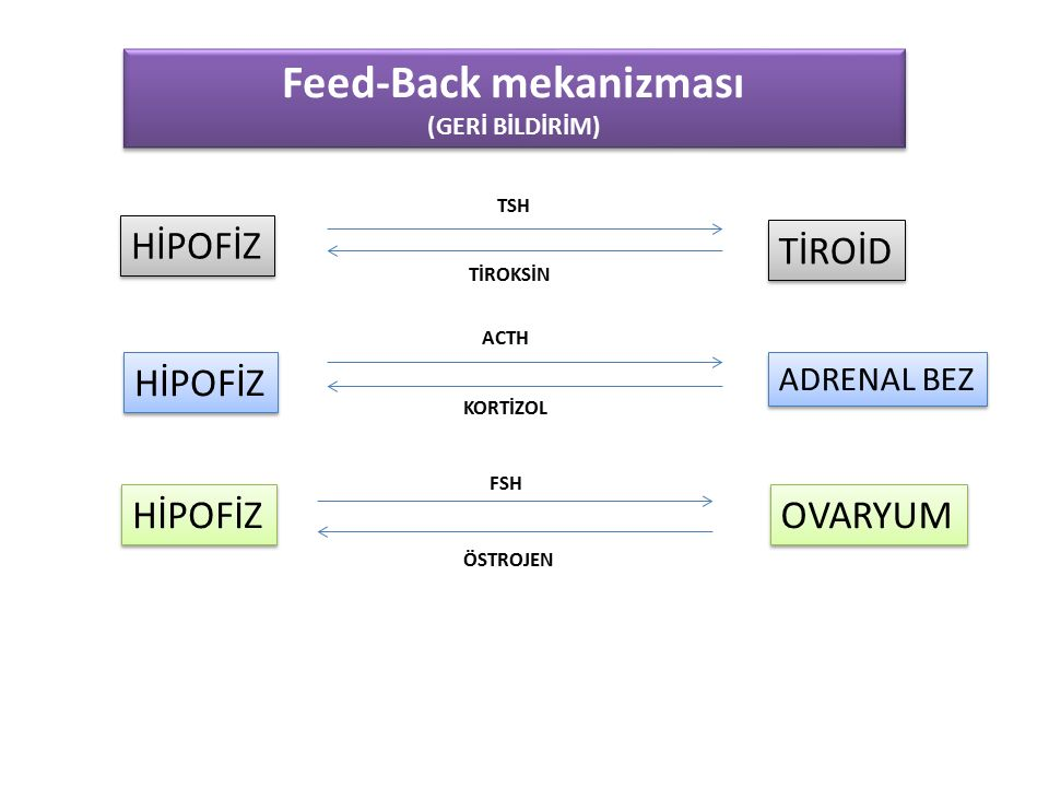 Feed-Back mekanizması