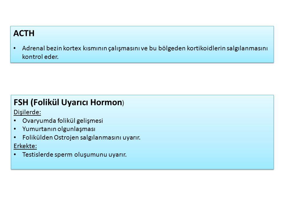 FSH (Folikül Uyarıcı Hormon) Dişilerde: