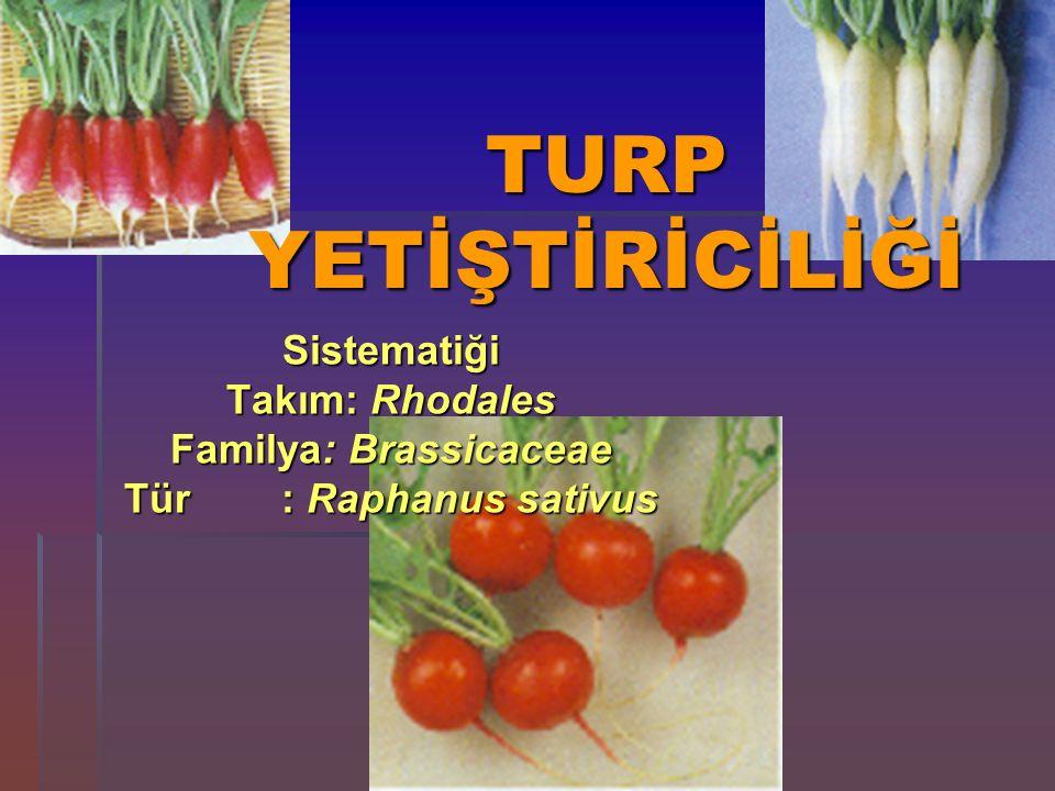 Familya: Brassicaceae