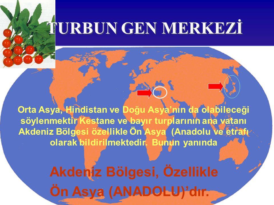 TURBUN GEN MERKEZİ Akdeniz Bölgesi, Özellikle Ön Asya (ANADOLU)'dır.
