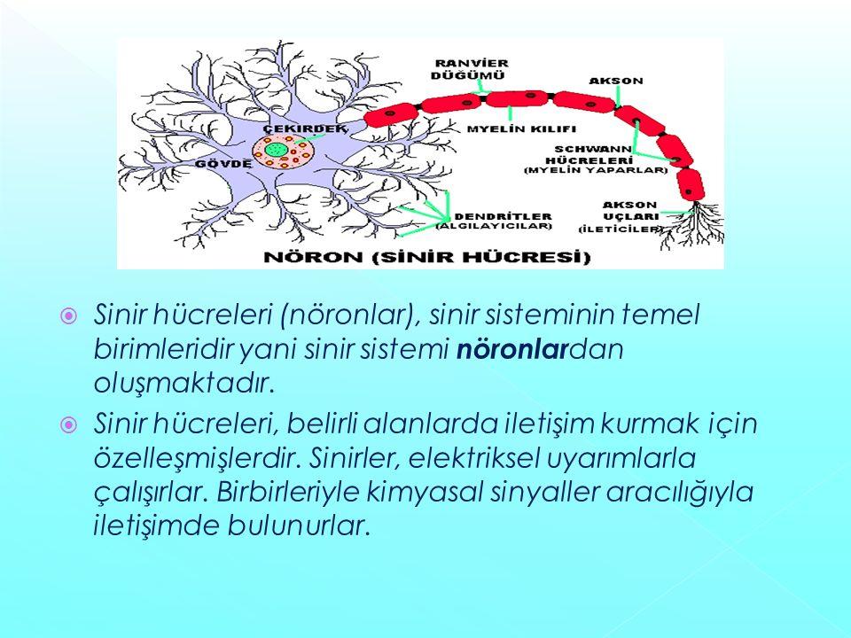 Sinir hücreleri (nöronlar), sinir sisteminin temel birimleridir yani sinir sistemi nöronlardan oluşmaktadır.