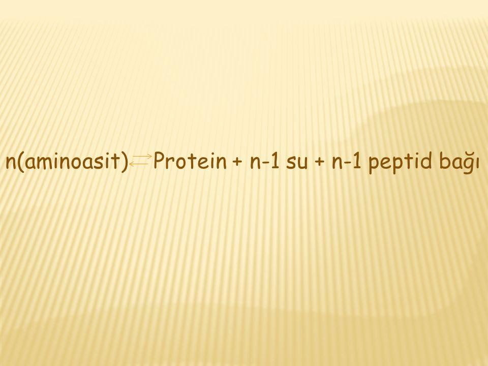 n(aminoasit) Protein + n-1 su + n-1 peptid bağı