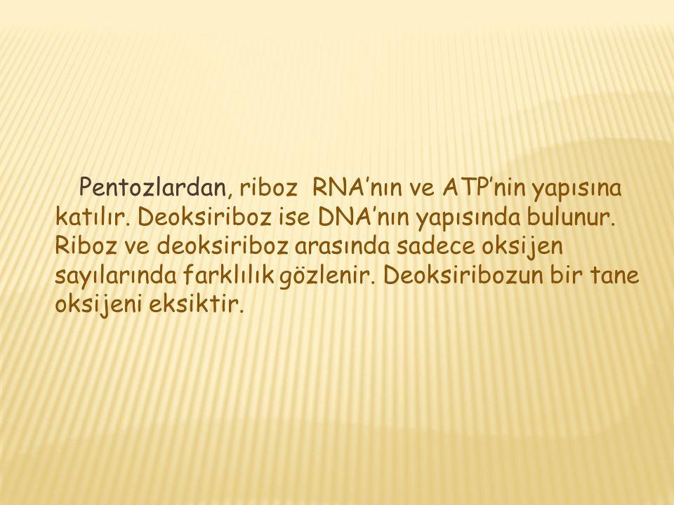 Pentozlardan, riboz RNA'nın ve ATP'nin yapısına katılır