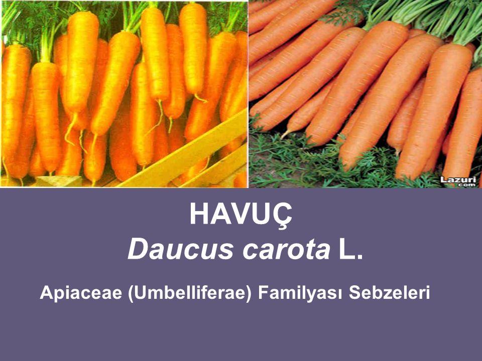 Apiaceae (Umbelliferae) Familyası Sebzeleri