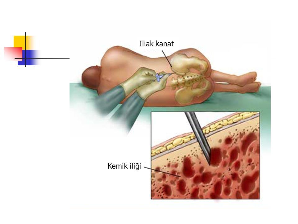 İliak kanat Kemik iliği