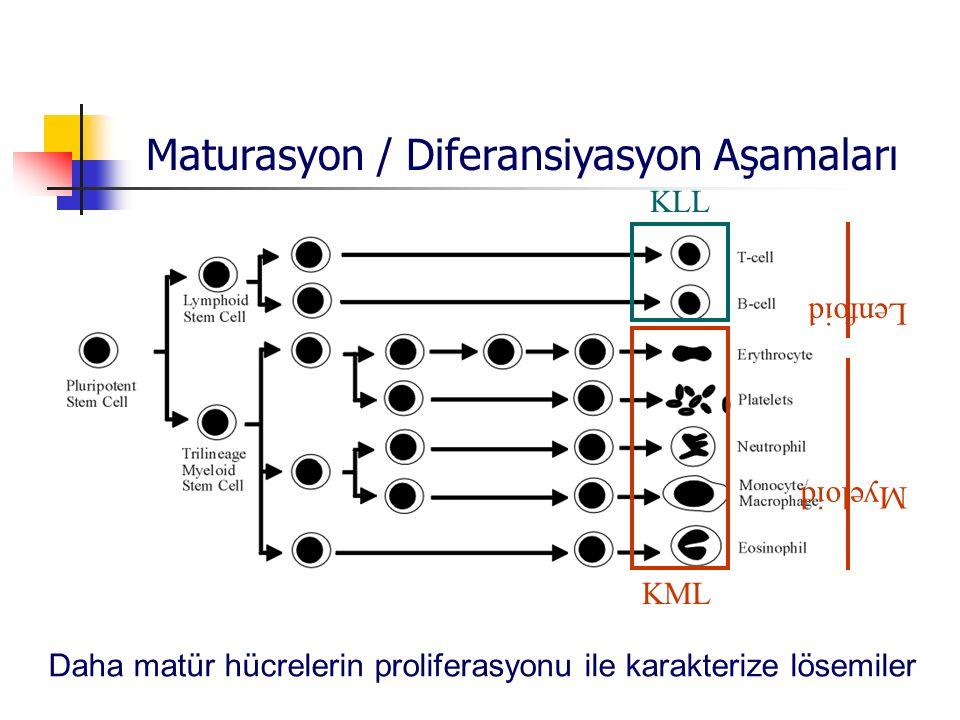Maturasyon / Diferansiyasyon Aşamaları