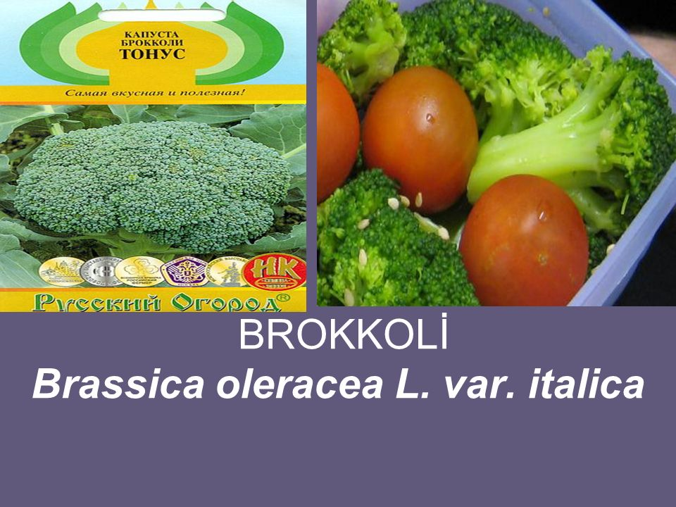 BROKKOLİ Brassica oleracea L. var. italica