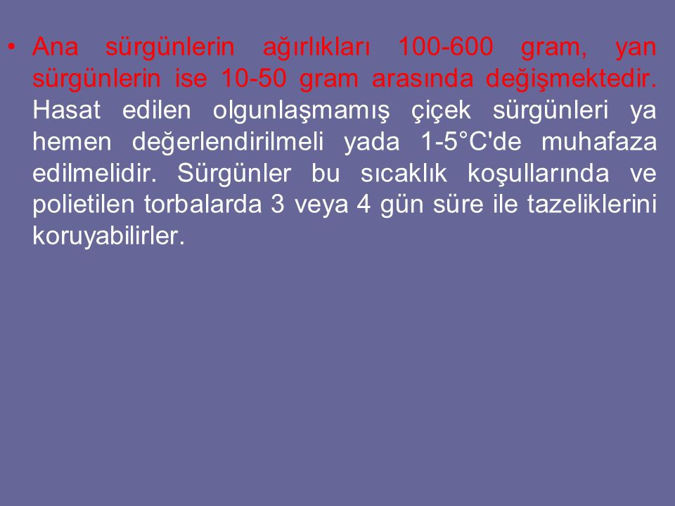 Ana sürgünlerin ağırlıkları 100-600 gram, yan sürgünlerin ise 10-50 gram arasında değişmektedir.