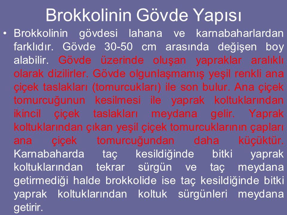 Brokkolinin Gövde Yapısı
