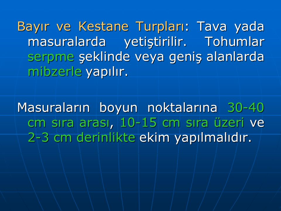 Bayır ve Kestane Turpları: Tava yada masuralarda yetiştirilir