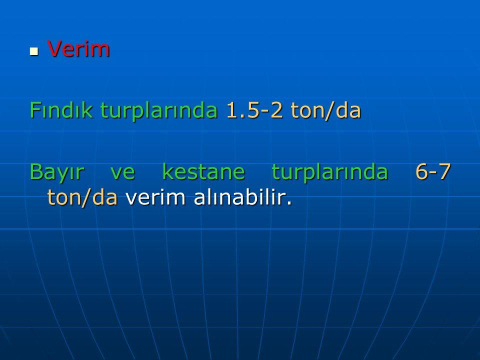 Verim Fındık turplarında 1.5-2 ton/da Bayır ve kestane turplarında 6-7 ton/da verim alınabilir.