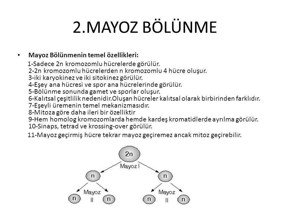 2.MAYOZ BÖLÜNME Mayoz Bölünmenin temel özellikleri: