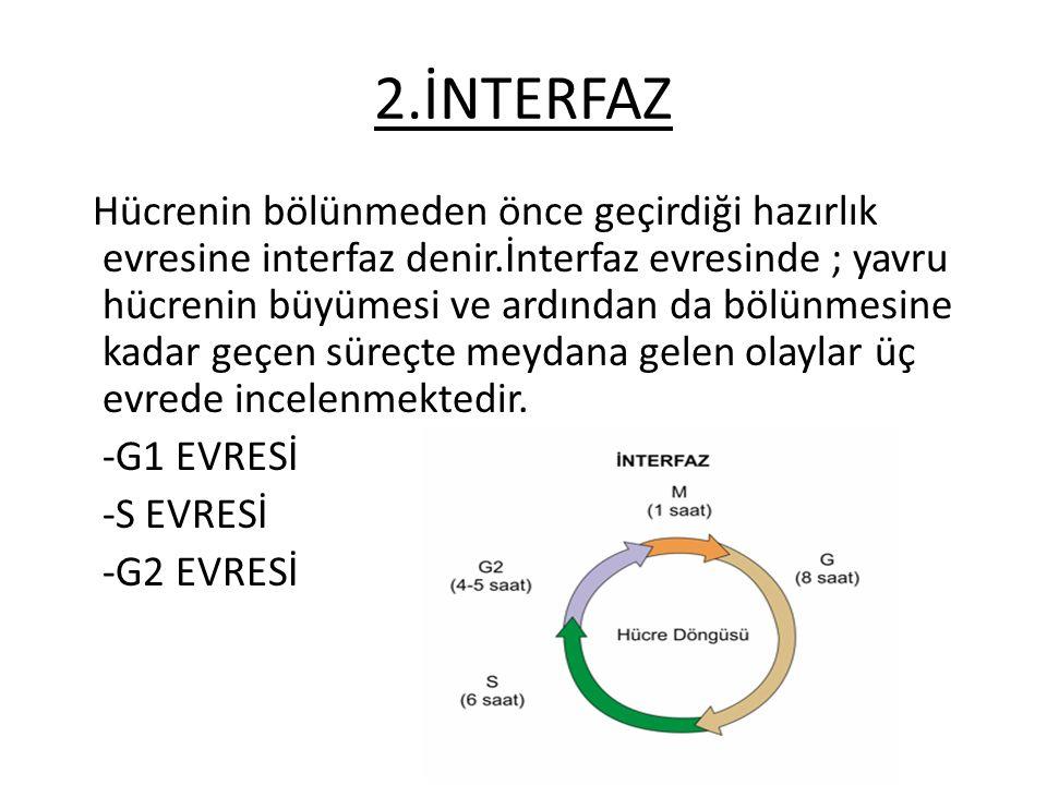 2.İNTERFAZ