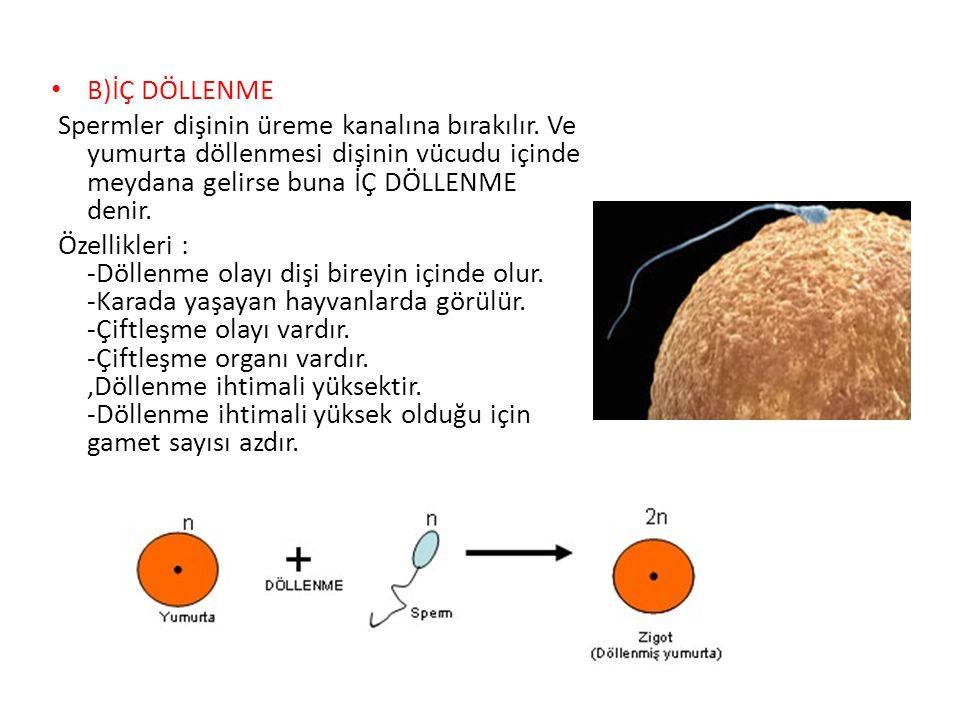 B)İÇ DÖLLENME Spermler dişinin üreme kanalına bırakılır. Ve yumurta döllenmesi dişinin vücudu içinde meydana gelirse buna İÇ DÖLLENME denir.