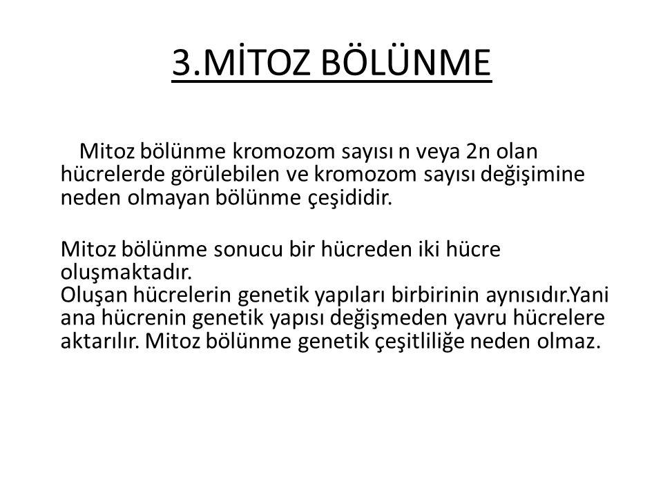 3.MİTOZ BÖLÜNME