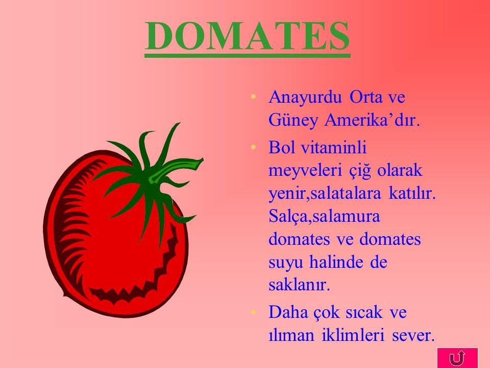 DOMATES Anayurdu Orta ve Güney Amerika'dır.