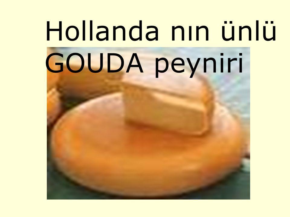 Hollanda nın ünlü GOUDA peyniri