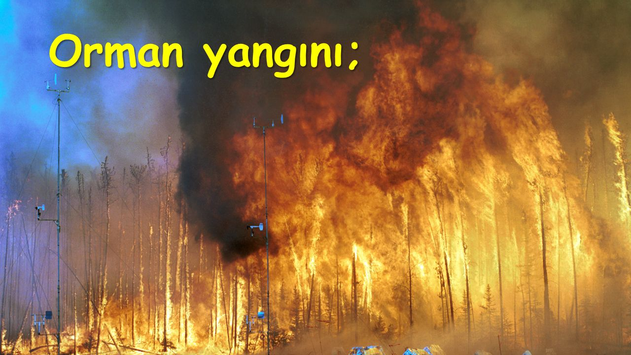 Orman yangını;