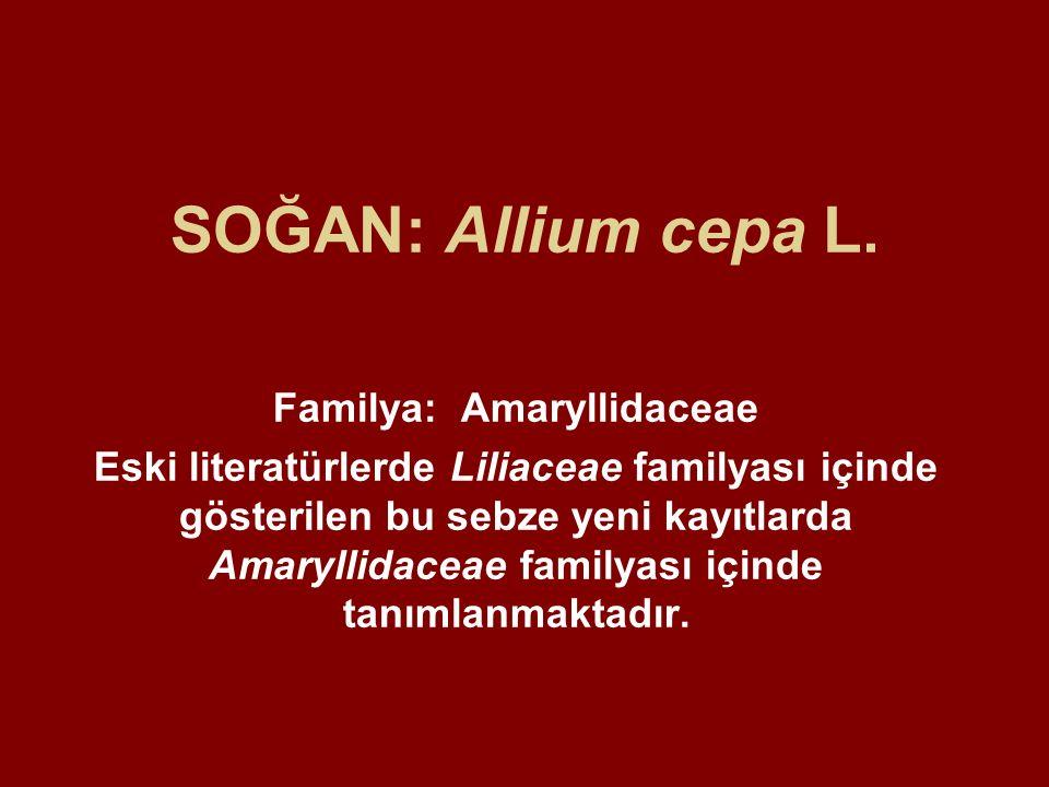 Familya: Amaryllidaceae