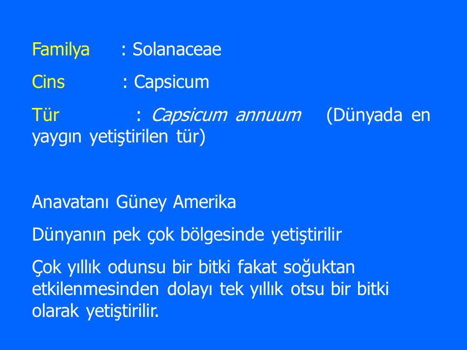 Familya : Solanaceae Cins : Capsicum. Tür : Capsicum annuum (Dünyada en yaygın yetiştirilen tür)