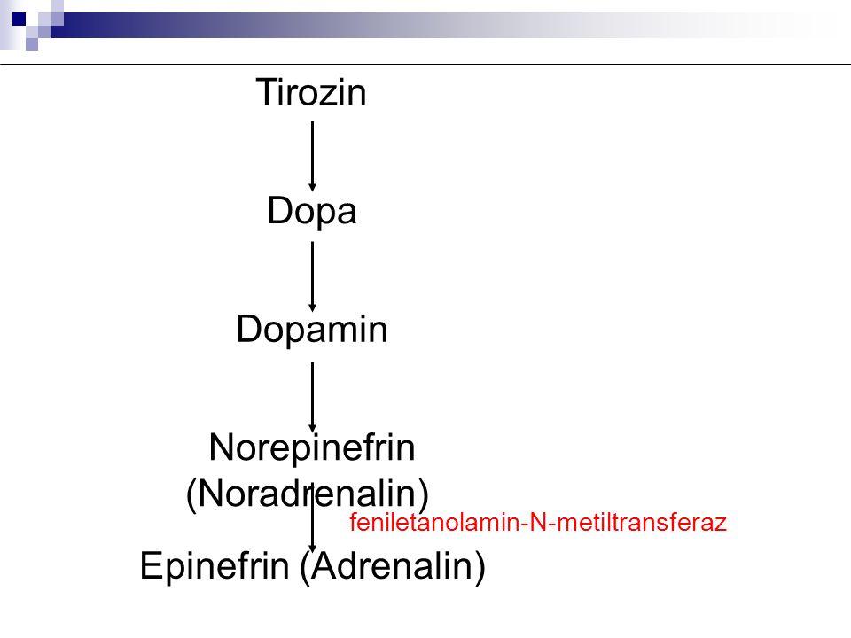 Norepinefrin (Noradrenalin)