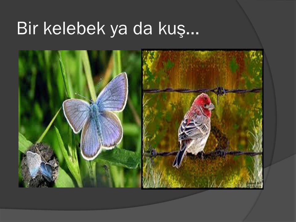 Bir kelebek ya da kuş…