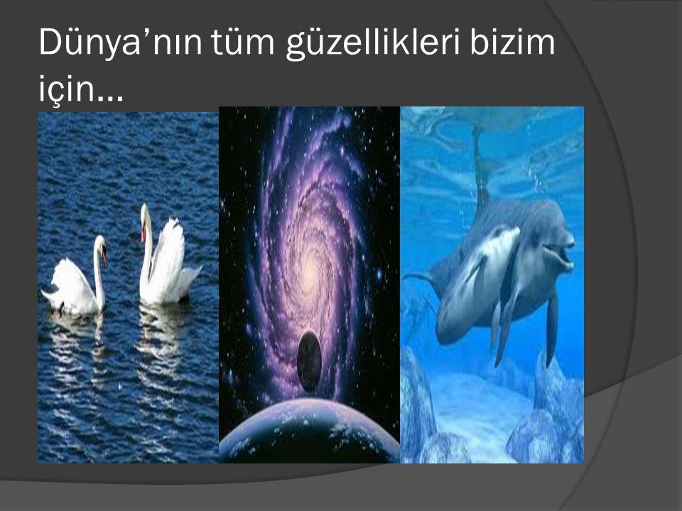 Dünya'nın tüm güzellikleri bizim için…