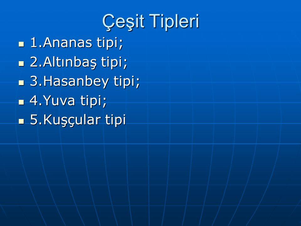 Çeşit Tipleri 1.Ananas tipi; 2.Altınbaş tipi; 3.Hasanbey tipi;