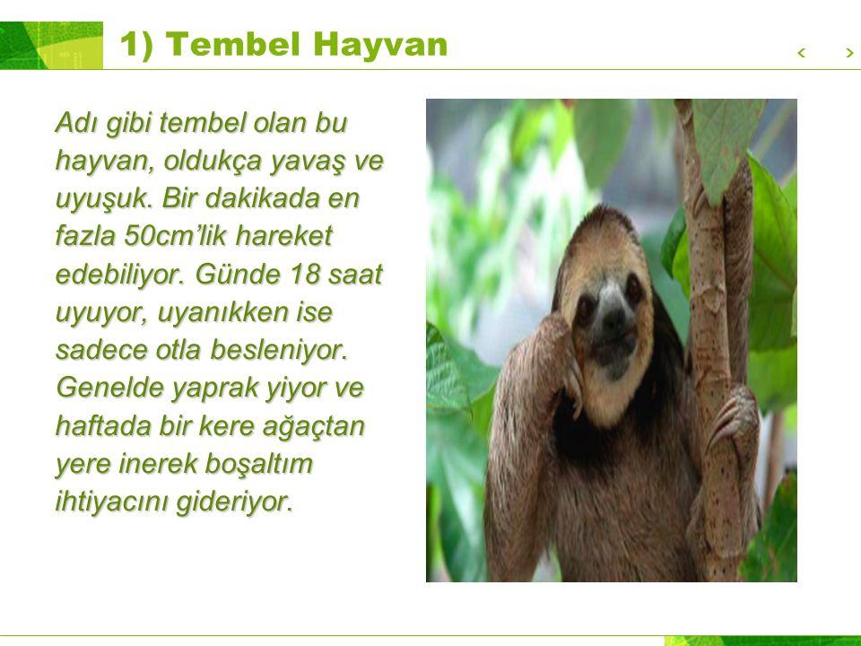 1) Tembel Hayvan